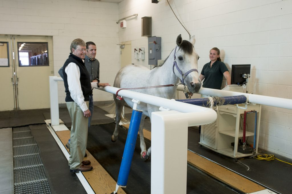 Dr. MacIllwain monitoring horse on treadmill.