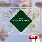 Strategic Plan PDF