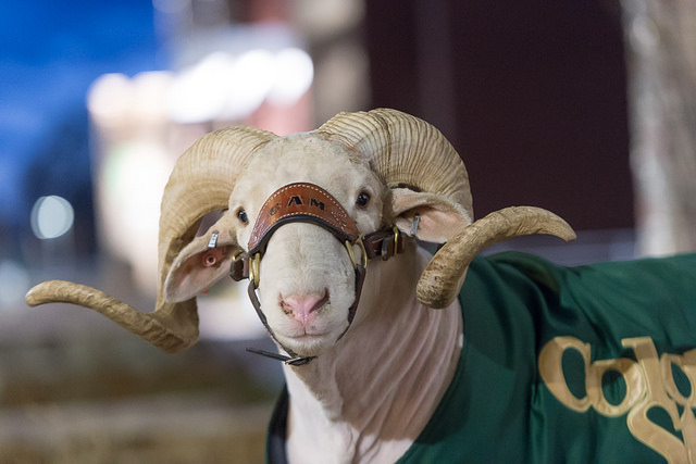 Cam the Ram, Colorado State University