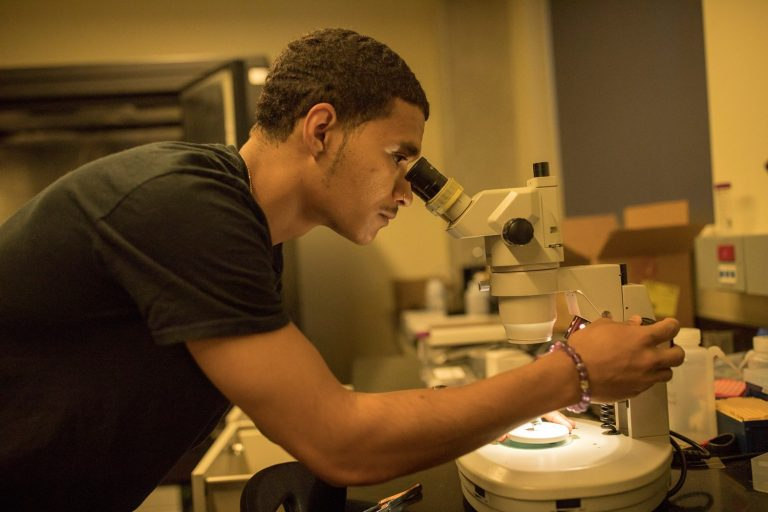 A student looks into a microscope