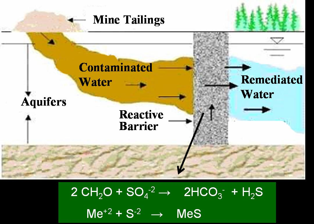 effects of acid mine drainage Answer acid mine drainage refers to the surface runoff formed when rainwater comes in contact with either mine spoils (the reject from ore processing activities) or overburden (the material.